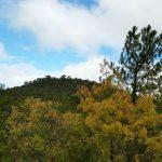 Los numerosos significados de la no pérdida neta de biodiversidad