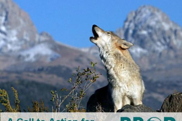 Llamada a la acción de la Comunidad de Prácticas del BBOP para a impulsar mayores esfuerzos que aseguren la «ganancia neta de biodiversidad» en el contexto del desarrollo.